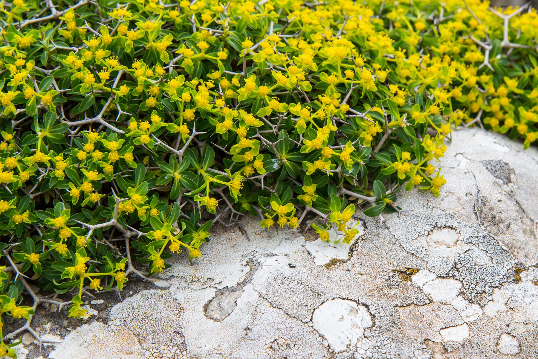 еще немного горных камней и растений