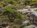 карликовая растительность, очень похоже на деревья