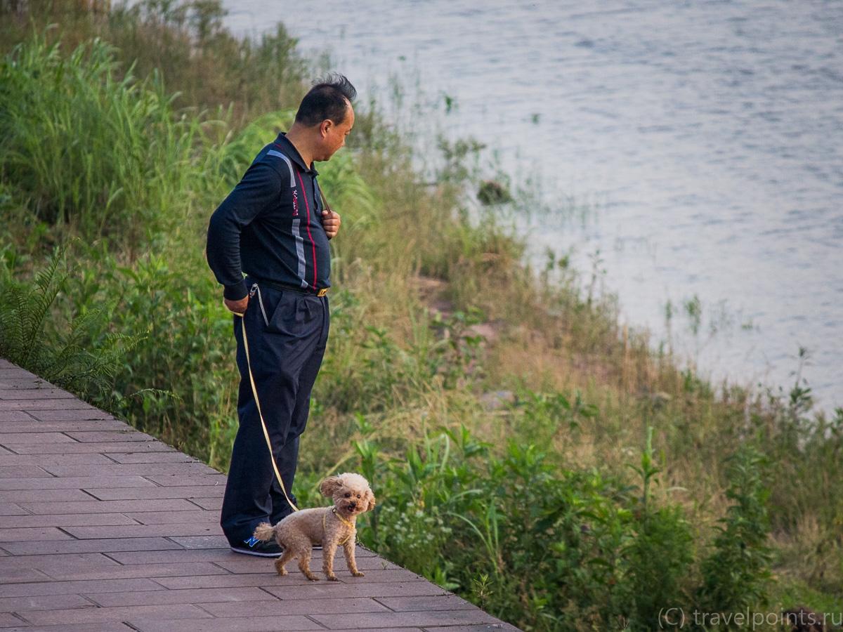 Мужик с собакой