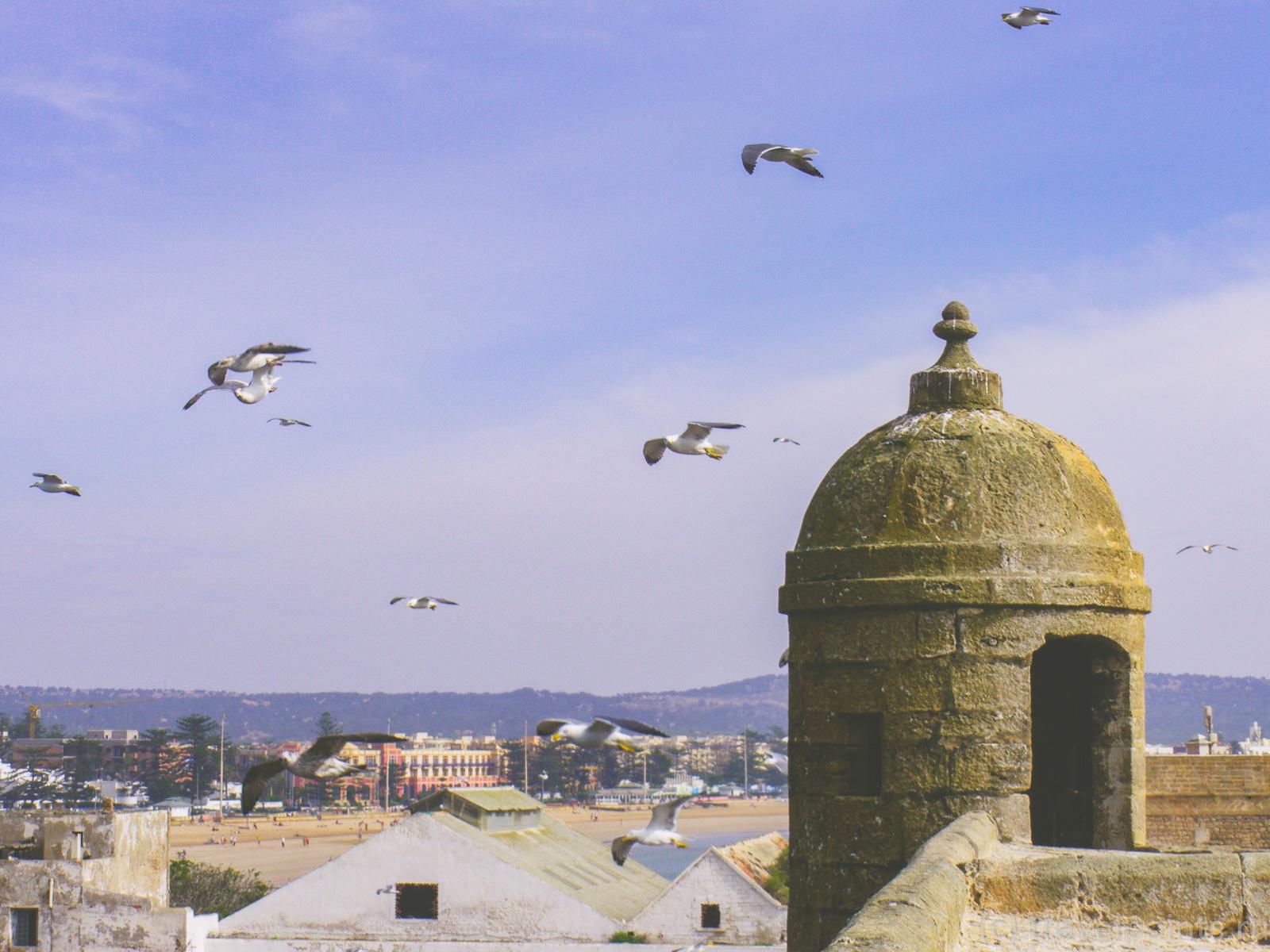 Чайки над крепостью