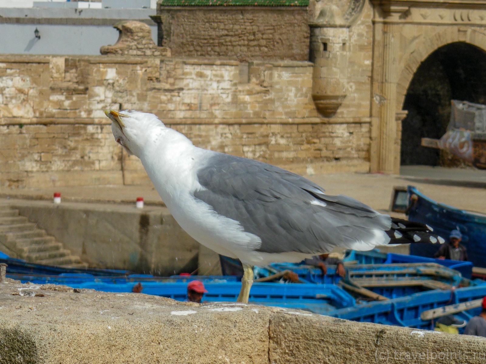 Смешная чайка