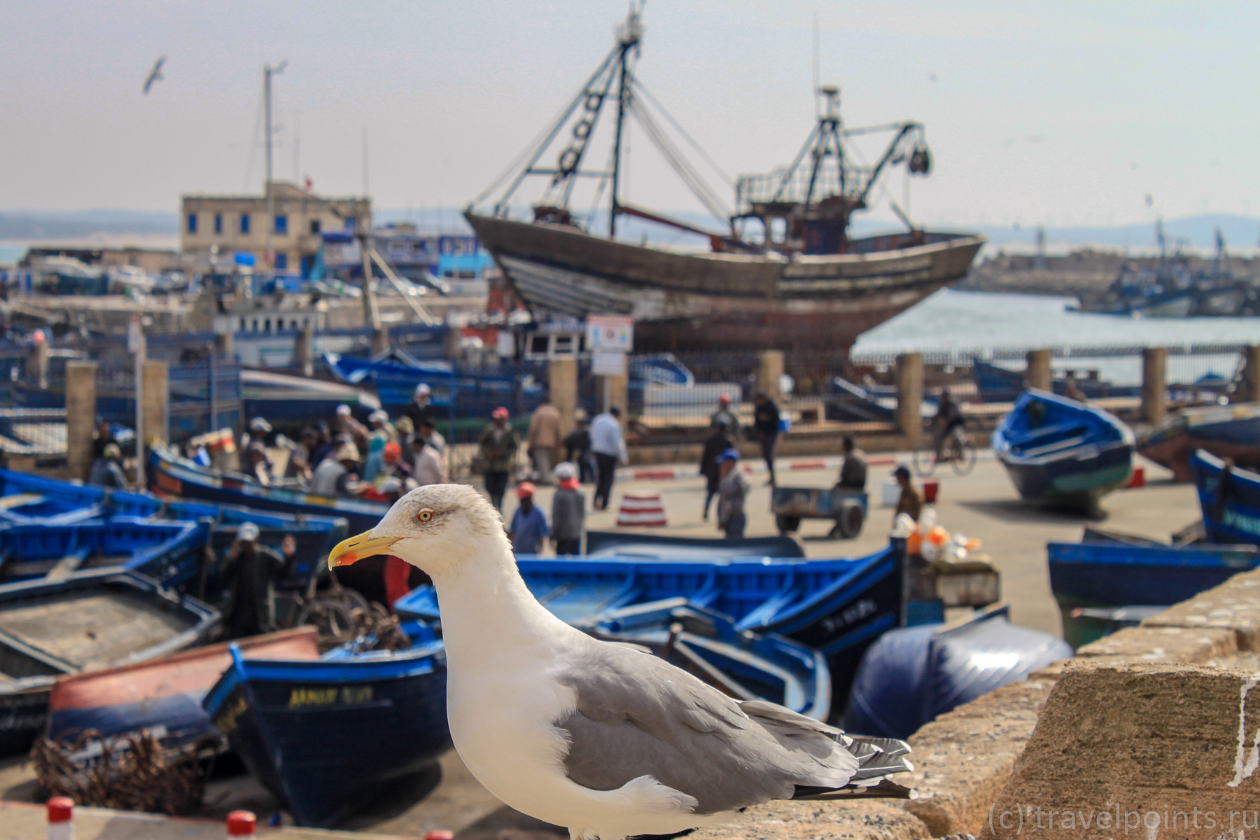 Чайка позирует на фоне порта