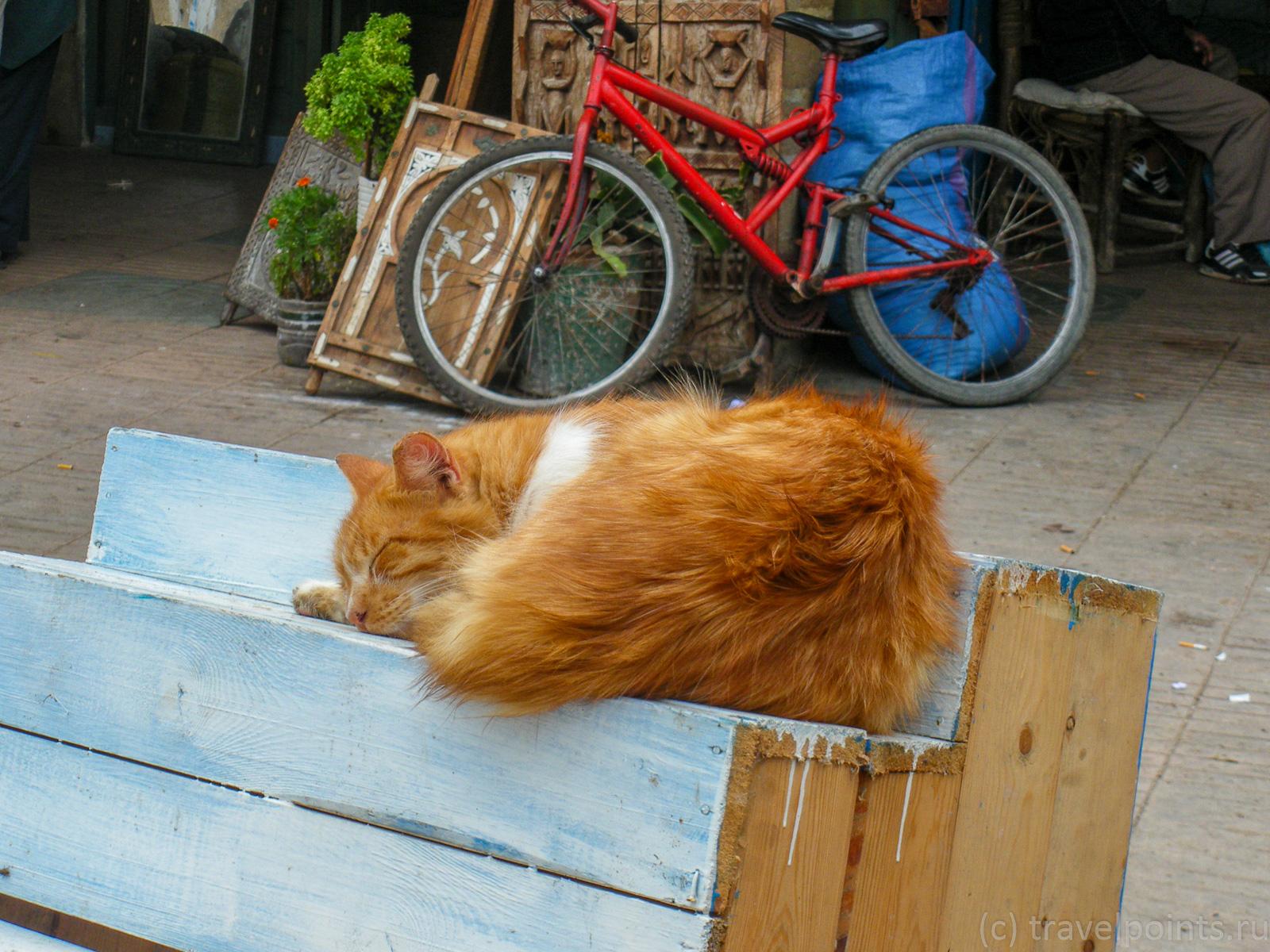 Котики 2