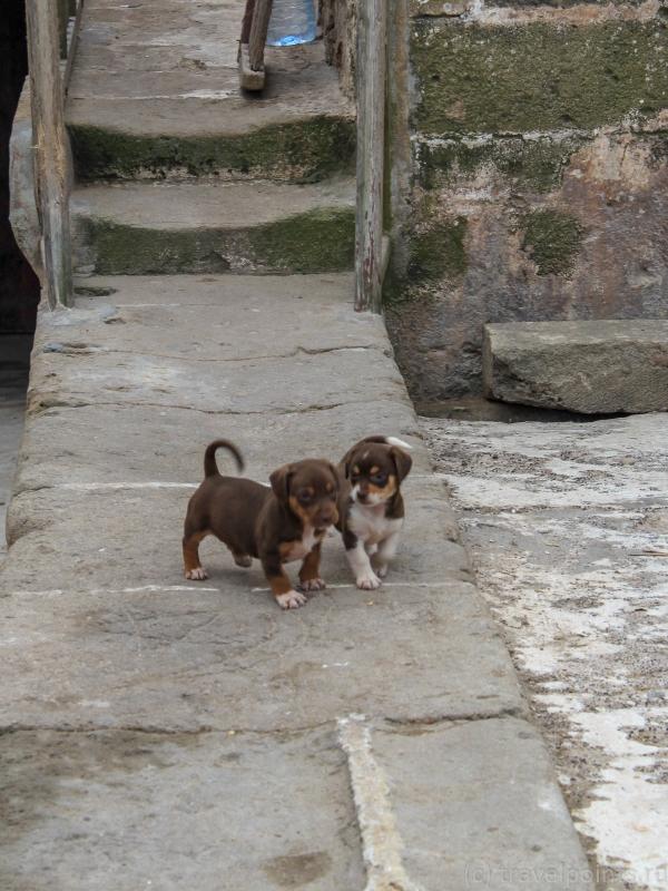 Обнаружены щеночки