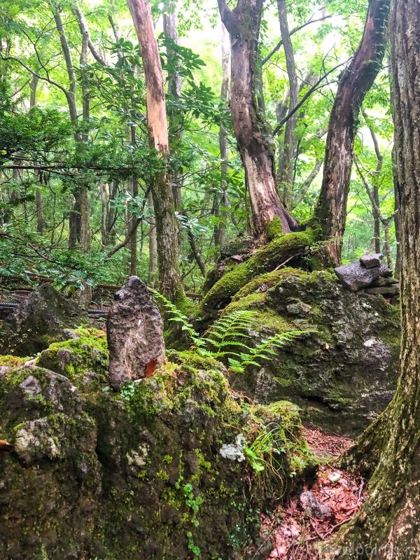 И еще лес