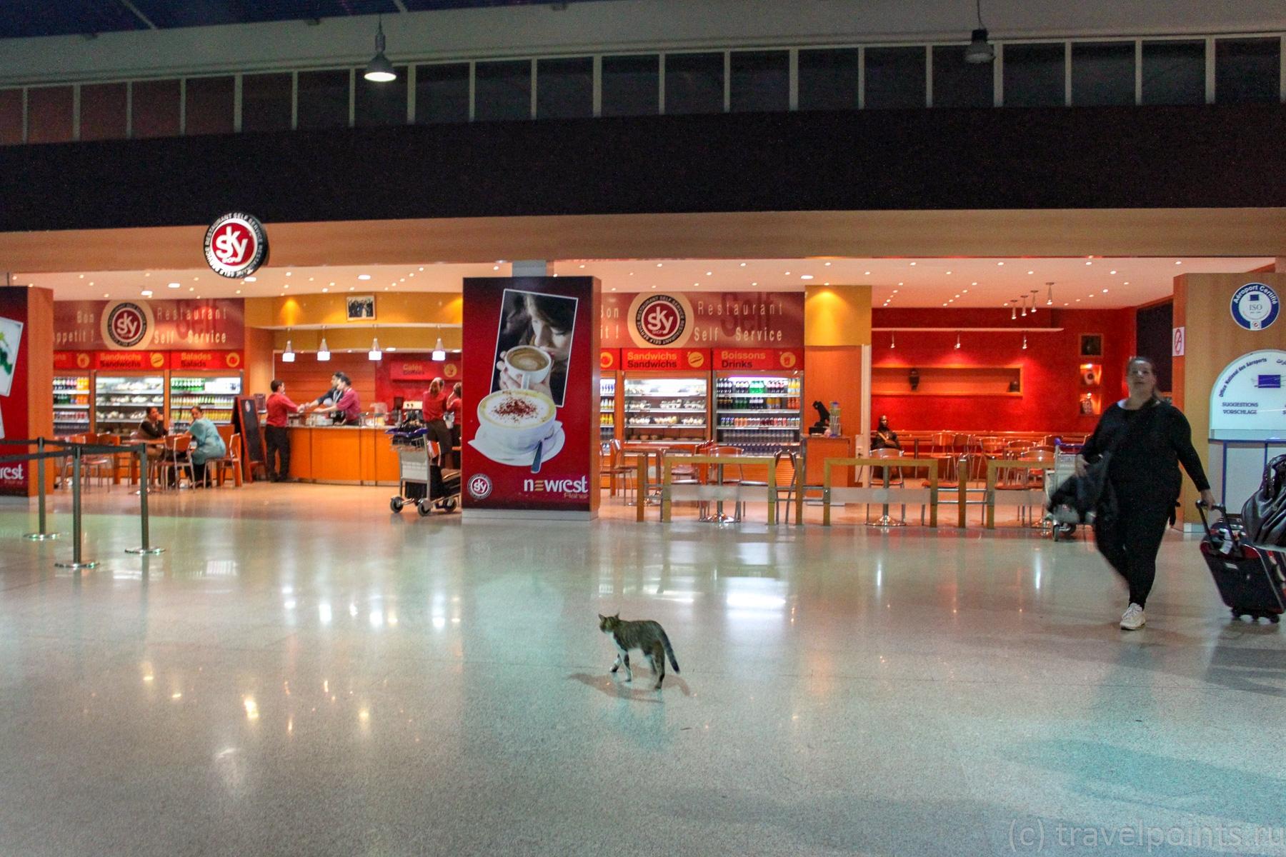 Котики в аэропорту