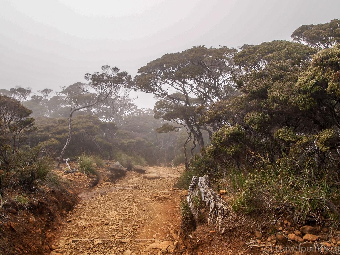 Немного туманных пейзажей