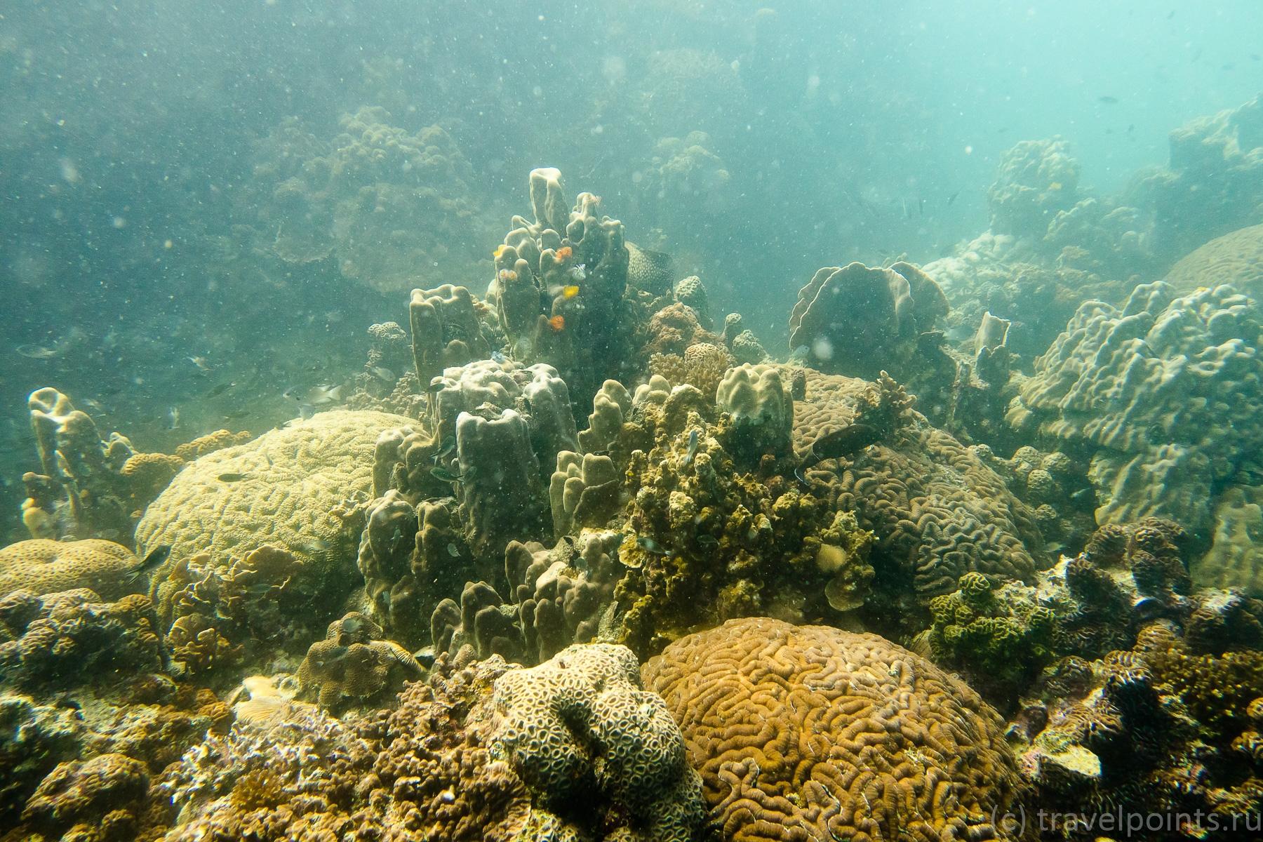 Чумпон кораллы
