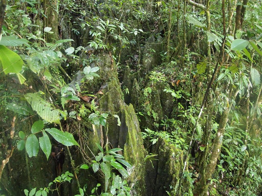 Национальный парк Мулу, Борнео, Малайзия