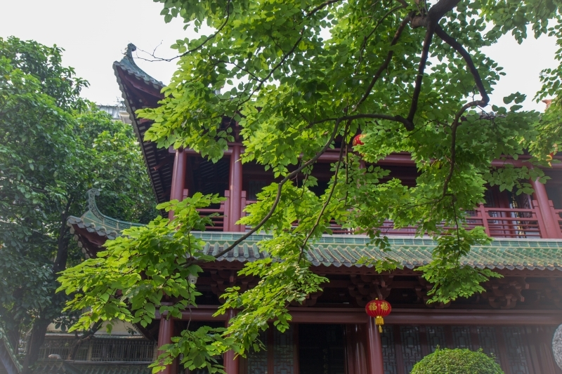 Вид на дерево в храме