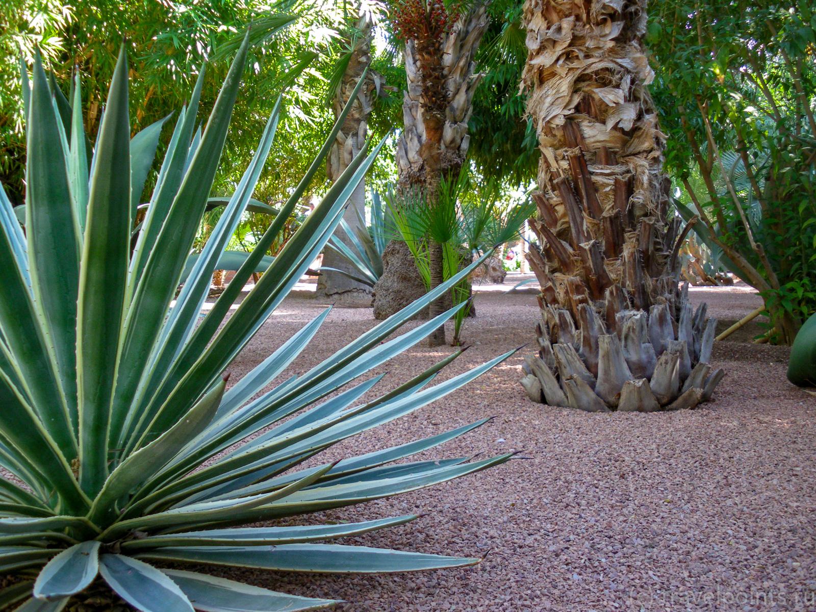 Кусочек агавы и  пальмы
