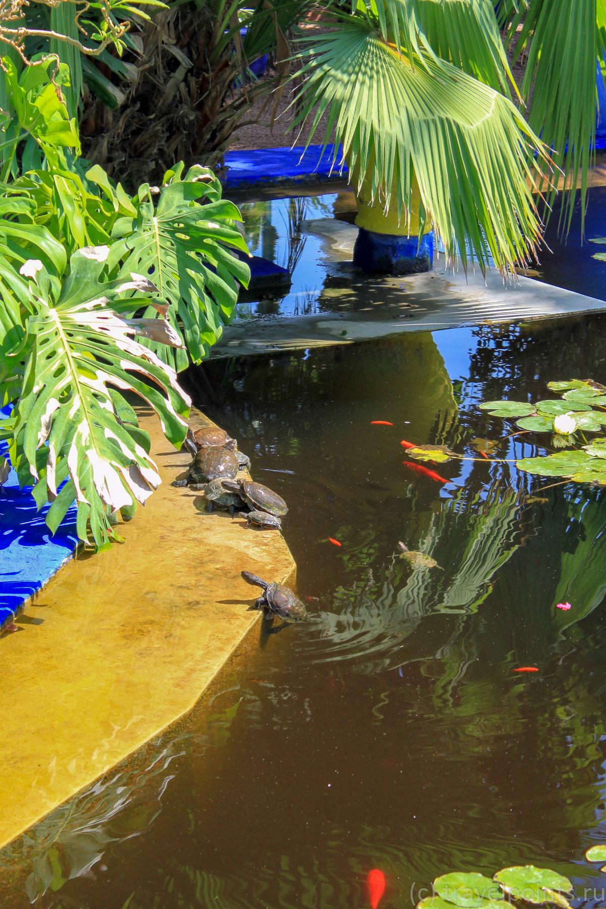 Рыбки и черепахи