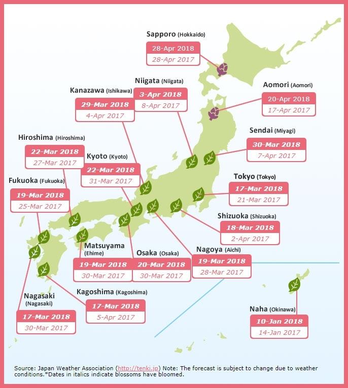Прогноз цветения сакуры в Японии 2018