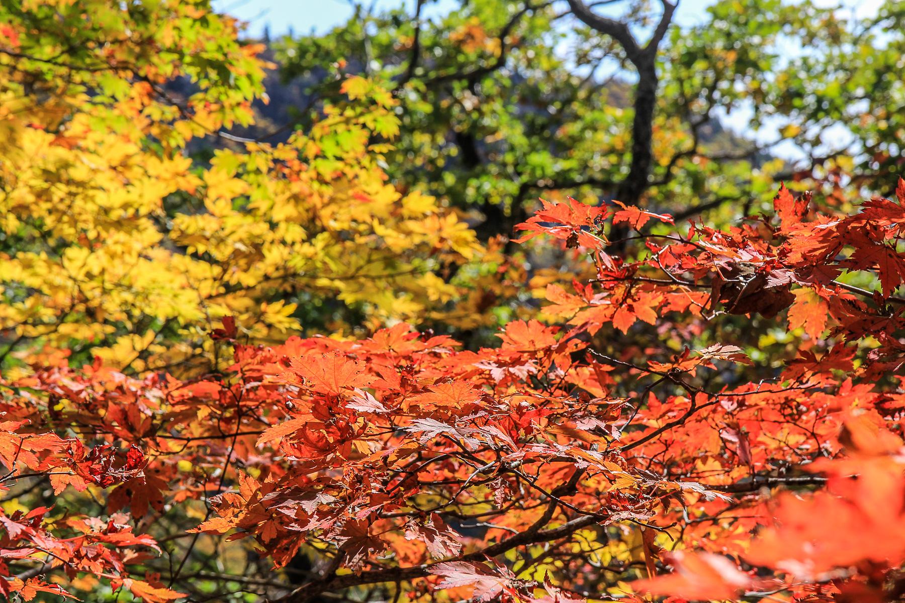 Три цвета парка Сораксан