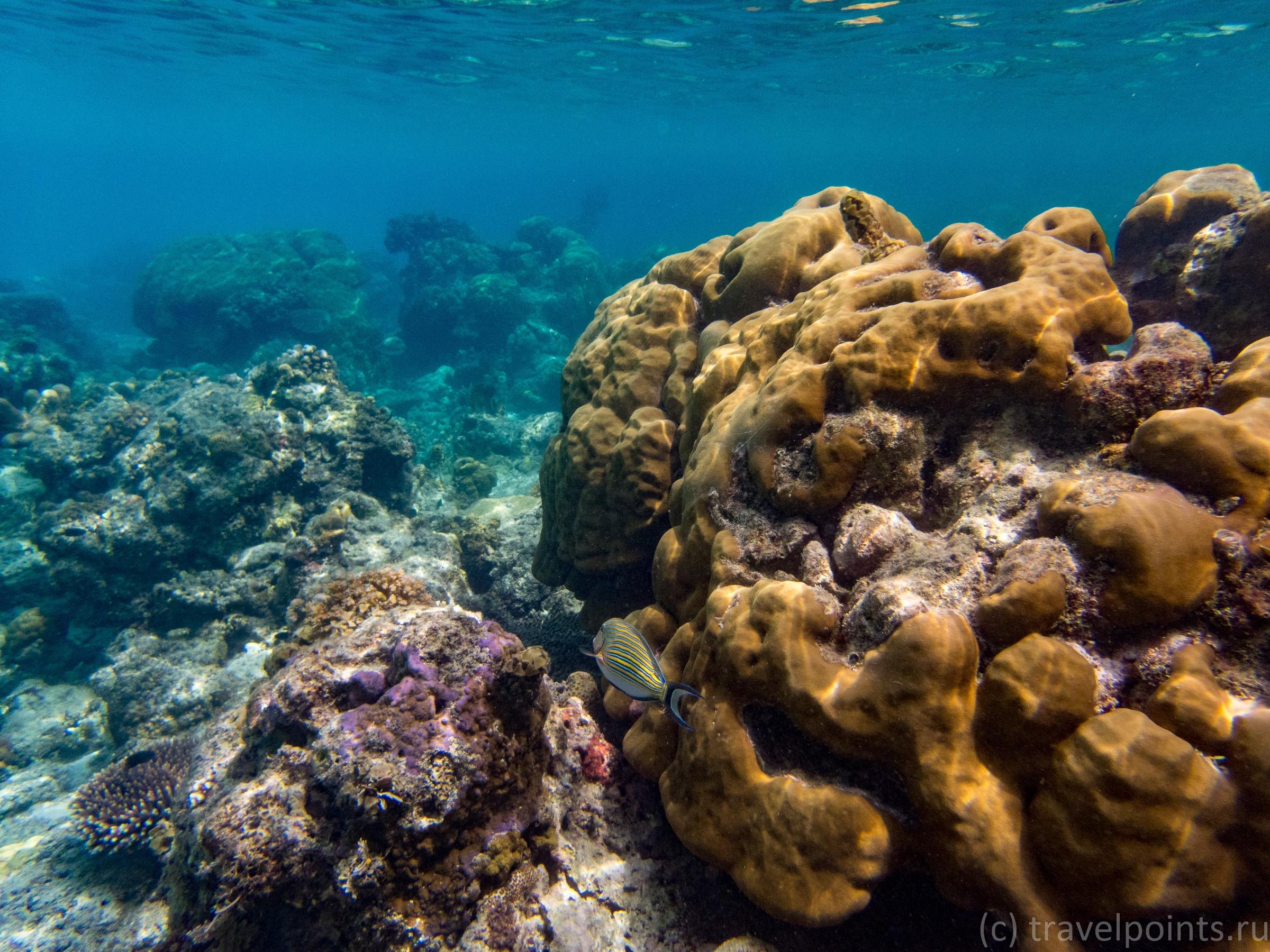 Кусочек рифа около Сера бич