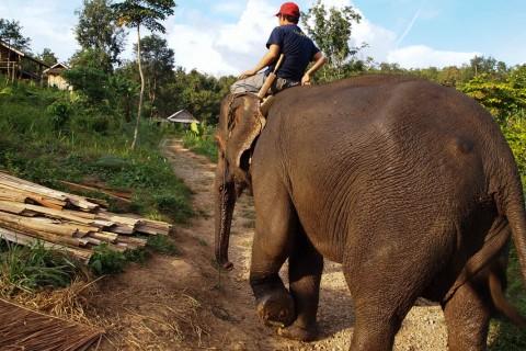 Слон и погонщик в центре сохранения слонов